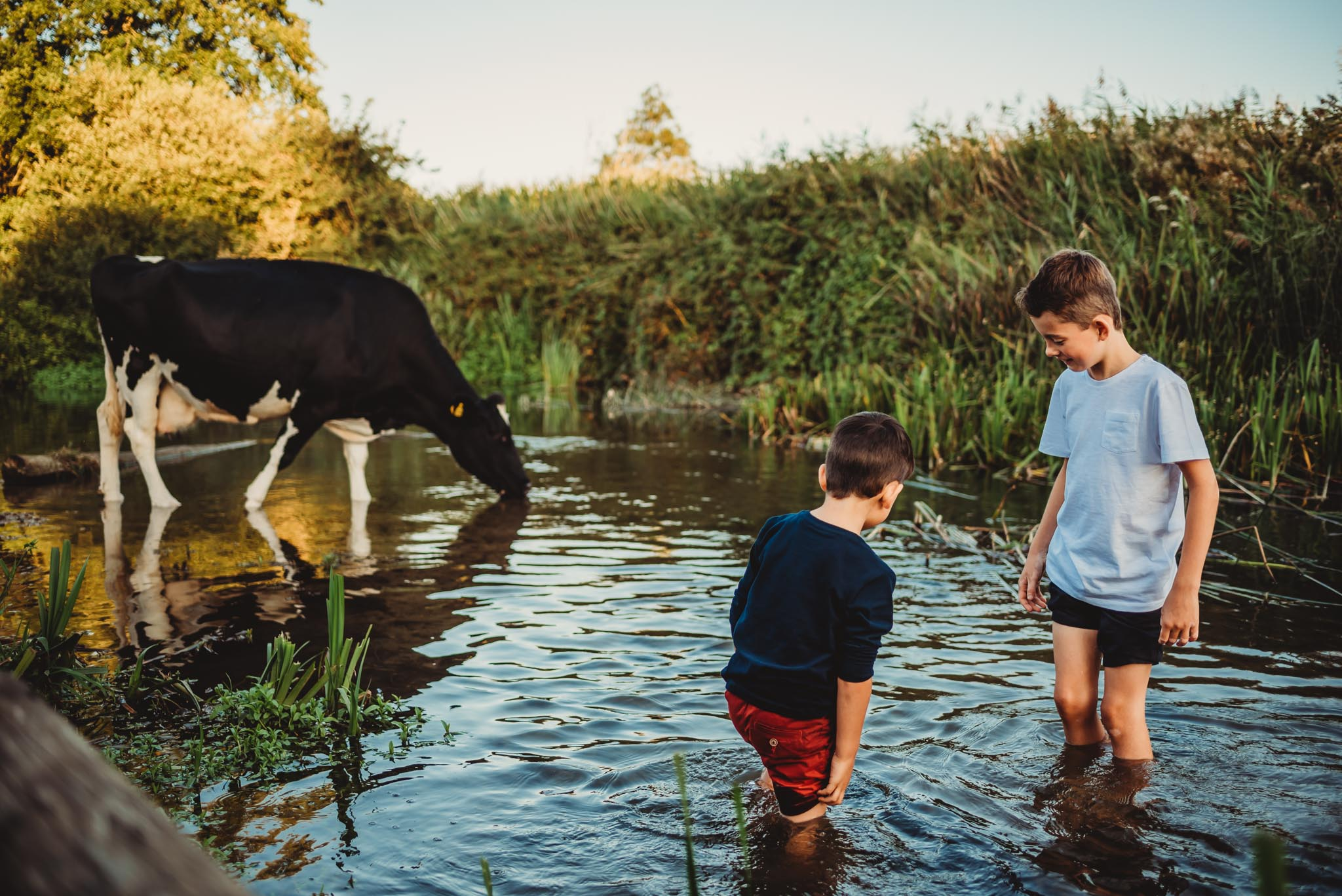 two boys playing in a river whilst a cow drinks next to them